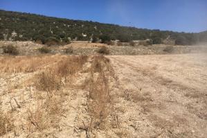 Trabajos desbrozado en restos de cosecha gisaroles